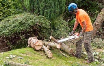 additional services offered by Camlough tree surgeons