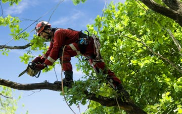 find trusted rated Camlough tree surgeons in Newry And Mourne