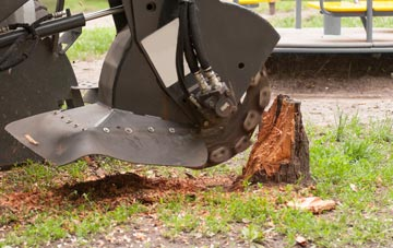 professional Camlough stump grinding services