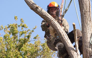 finding qualified Camlough tree surgeons