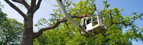 Camlough tree surgery services