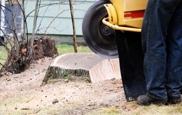 rated Camlough tree stump removal companies