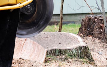 tree stump grinding Camlough, Newry And Mourne