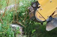 free Camlough tree stump grinding quotes
