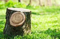 Camlough tree stump removal services