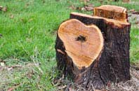 free Camlough tree stump removal quotes