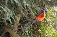 free Camlough tree surgery quotes